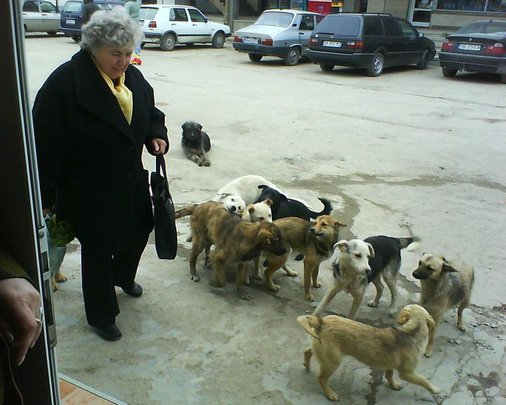 Dogs on the streets in Romania