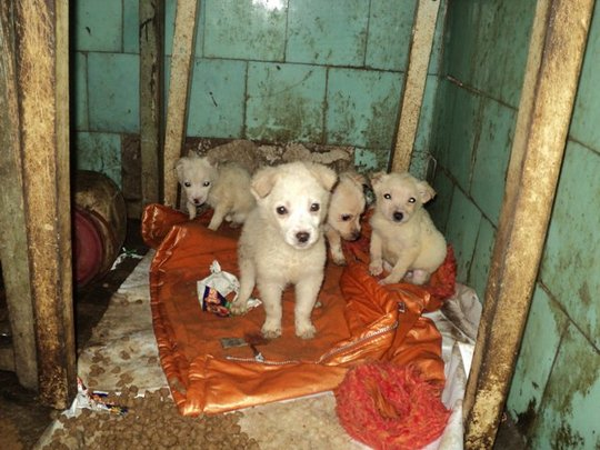 puppies living in abandoned house