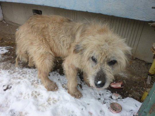street dog in Romania