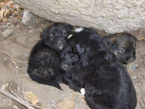 Puppies born on the streets of Romania