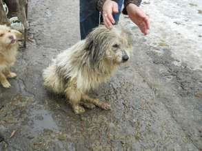 Dog who was hit by a car in Romania