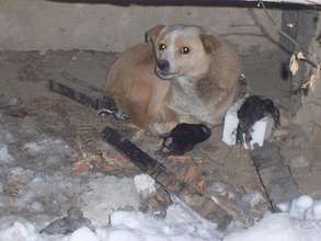 Mama dog on the street with dead pups