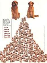 Neuter and Spay poster