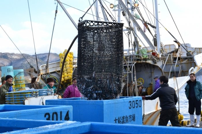 Ofunato fish market reopens with Mercy Corps