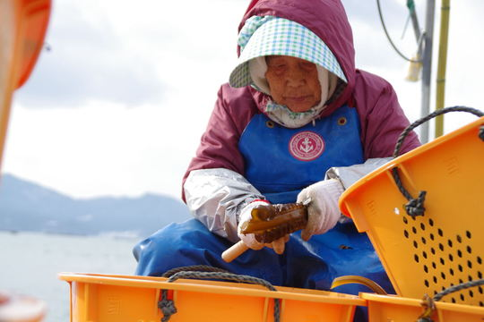 Women Prepares Seaweed for Market