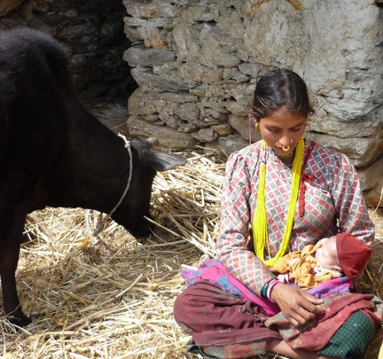 Mother with new born baby in cowshed