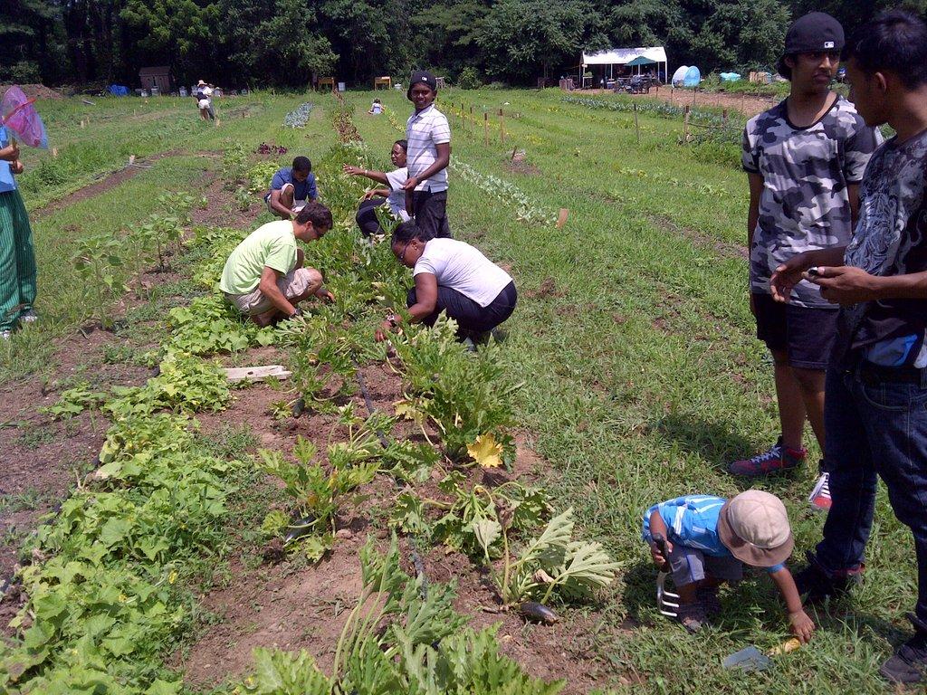 Summer Organic Gardening Program for Kids