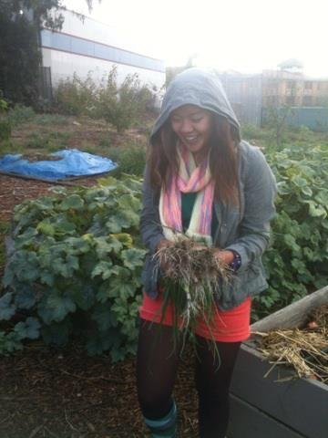 Chilly weeding and harvesting :)