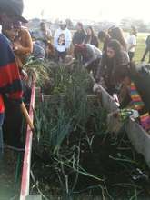 RHS class harvesting for 1st CSA of 2012