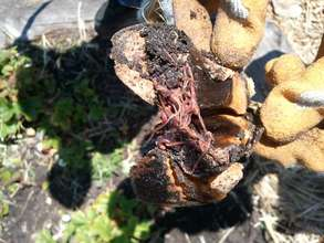 FOOD WASTE + WORMS = AMAZING SOIL <3