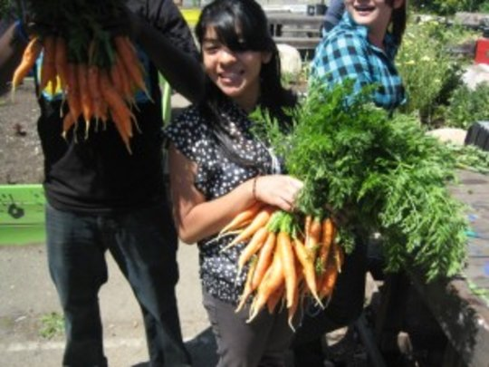 Richmond High CSA Carrot Harvest