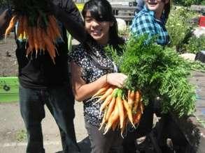 Richmond High CSA Carrot Harvest