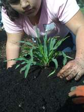 One of Our Students Planting