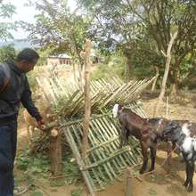 Goat Rearing Program and supervision, Dang