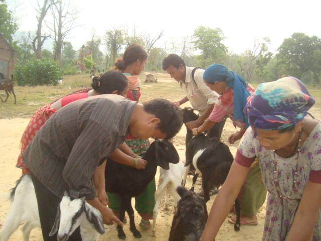 Goat Vaccination program