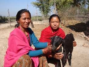 Raising goats for improved livelihoods
