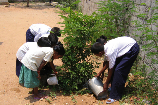 Planting trees in FF home premises
