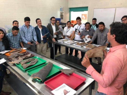 Workshop Identification of Shark Fins Guatemala