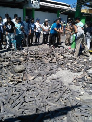 Shark Fins Guatemala