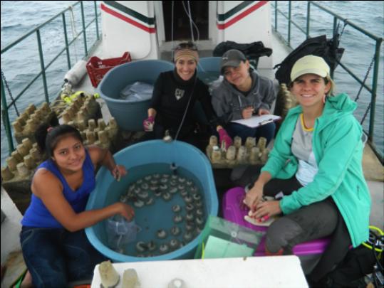 Fellows Ana Giro and Angela Mojica restoring coral