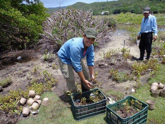 Mariela Ochoa planting mangroves in Guanaja