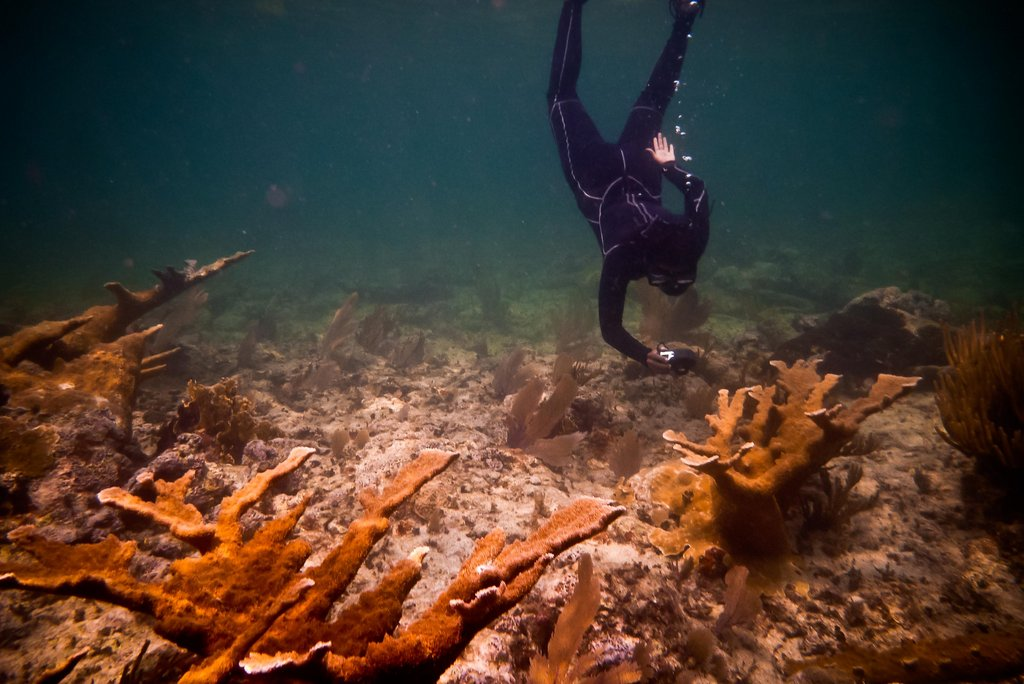 Gaby Nava, a member of the 2011 Leadership Generation, is looking to restore Elkhorn Coral to improve coastal protection and recruit important commercial fish species.