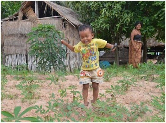 Sok's grandchild plays amongst the new cassava.