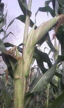 Presence Mutundi's garden