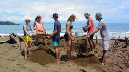 Preparing the beach in 2018