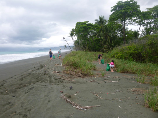 Volunteers cleaning the beach at Rio Oro