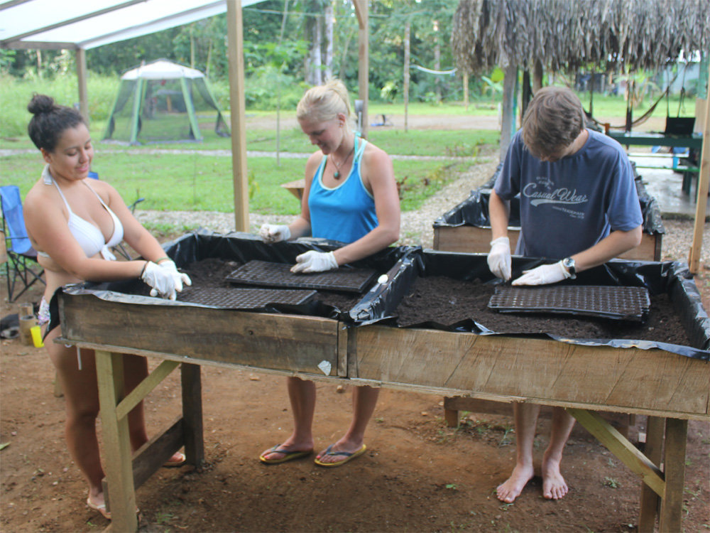 Volunteers planting vegetables