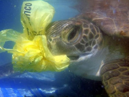 A sea turtle attempts to eat a plastic bag