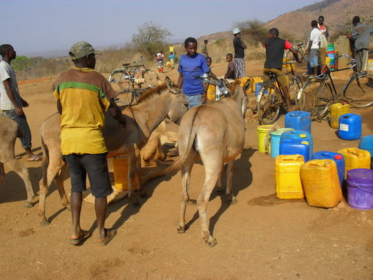 Donkey owners in TZ getting their donkeys checked