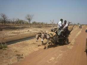 Working donkeys in Ghana