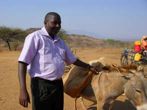 Provide care for horses and donkeys in Africa
