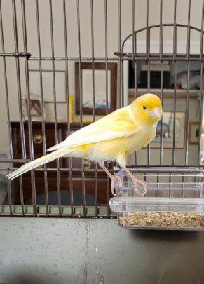 Beasley - canary