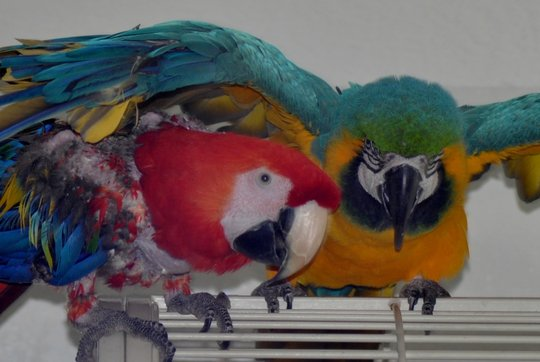 Rocky has taken King under his wing - literally!