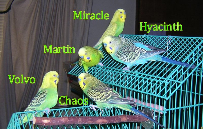 Part of the Budgie Gang