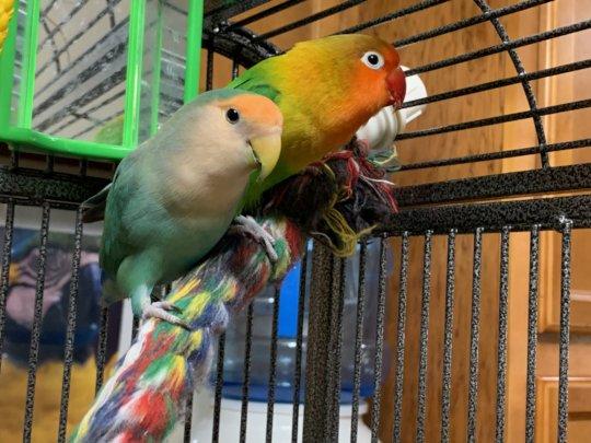 Maddie and Attica - lovebirds
