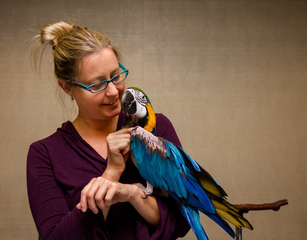 Pico, a Blue and Gold Macaw, enjoying his person