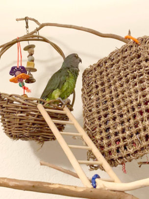 Erin, a Meyers Parrot