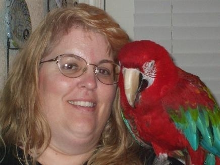 Rico, a greenwing macaw in hospice care
