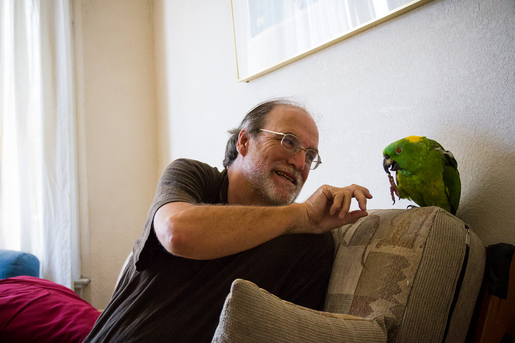 Cappi, a yellow-naped amazon, came to Mickaboo Companion Bird Rescue with airsaculitis, a chronic condition requiring periodic treatments.  Cappi is otherwise healthy and enjoys talking (in English) with the public at Mickaboo