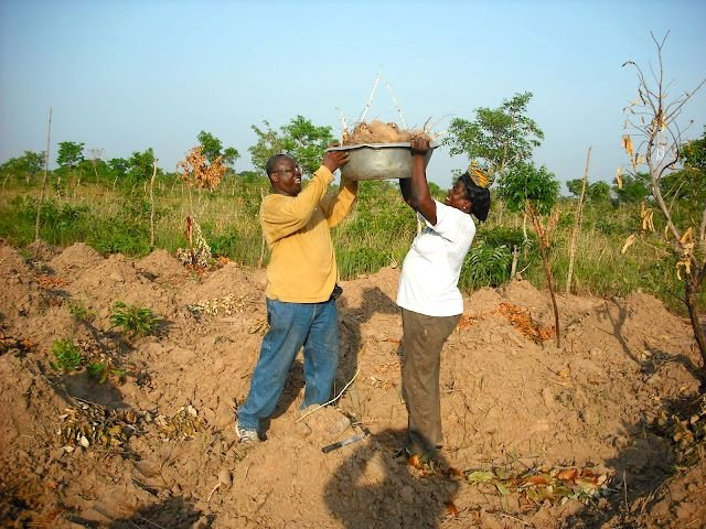 A man helps a woman carry the tubers she just harvested from a farm. This harvest was made possible by the irrigation system that was put in place by the African Development Initiative.