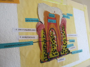 "Colorful ""Mouth Map"" Made by Bolivian Students"
