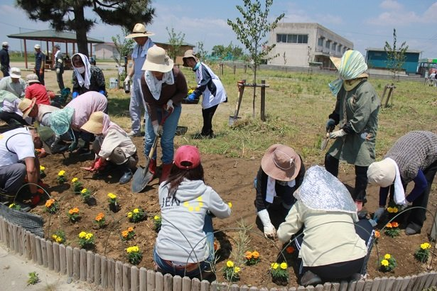 Locals and volunteers plant tulip bulbs together