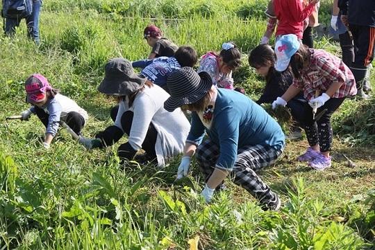 Volunteers Weeding