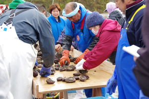 Sorting Abalone by sizes