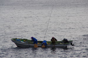 Fishermen harvesting Abalone traditional way
