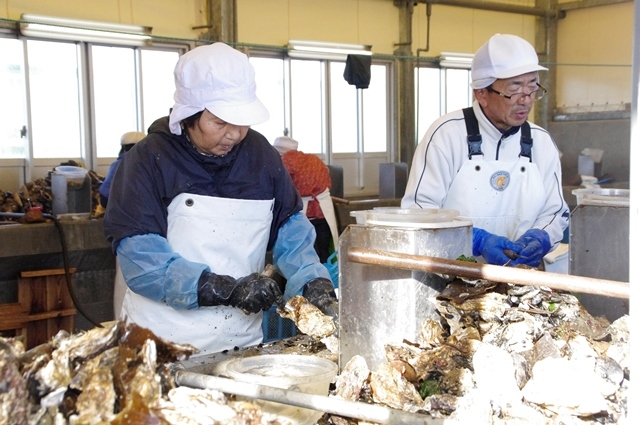 Oyster Fishermen Behind the New Fence (Photo: PWJ)